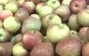 """Sự thật về """"táo đá Hà Giang"""" đang tràn lan các chợ"""