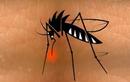 Tìm hiểu những bệnh nguy hiểm do muỗi gây ra