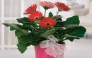 Video: Chậu hoa để ở đâu giúp sự nghiệp thăng tiến, gia đình hạnh phúc