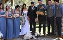 """Cặp đôi gây sốt khi """"mời"""" thú cưng làm khách trong đám cưới"""