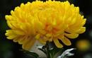 Chọn hoa cắm bàn thờ ngày Tết để rước lộc vào nhà