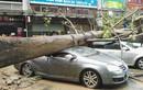 Chùm ảnh bão số 6 Hato tàn phá Hong Kong, Trung Quốc