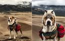Ghen tị hành trình du lịch cảm hứng của cặp đôi chó mèo