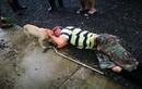 Chuyện chó cưng cứu chủ ngoạn mục... lan truyền nhanh như virus