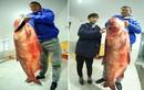 """""""Chân dung"""" cá mè """"thành tinh"""", nặng 65kg vừa câu được"""