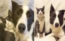 """Kỳ lạ tình yêu giữa cặp đôi chó mèo có """"tướng phu thê"""""""