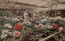 Mãn nhãn ảnh tuyệt đẹp chụp Nhật Bản cuối thế kỷ 19
