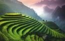 Ruộng bậc thang Việt Nam lọt Top điểm nên đến một lần trong đời