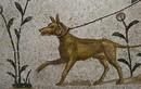 Giải mã vai trò đặc biệt của loài chó trong văn hóa Hy Lạp cổ đại