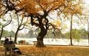 Hà Nội, miền Bắc nắng đẹp trước khi đón không khí lạnh mạnh