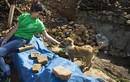 Xúc động cảnh động vật sống sót sau động đất Nepal (2)