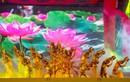 Lung linh đêm nhạc hội mừng Đại lễ Vesak tại Nha Trang