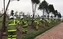 Hà Nội: Phòng mưa bão, kiến nghị đóng cọc thép níu cây xanh