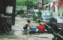 Ảnh: Tiềm tàng ổ dịch sốt xuất huyết xóm nghèo ở nhà tiền tỷ