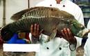 Cá sống cả trăm mét dưới đáy biển, giá 2,3 triệu/kg