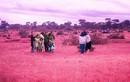 Đồi cỏ hồng ở Gia Lai đẹp rực rỡ không tưởng