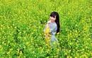 Ngẩn ngơ ngắm cánh đồng hoa cải vàng ở ngoại thành Hà Nội