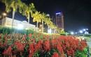 Ông Thanh qua đời, hủy lễ khai mạc đường hoa tại Đà Nẵng