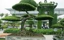 Loạt cây cảnh giá tiền tỷ tại Việt Nam