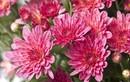 Trồng ngay những loại hoa này để vườn nhà đẹp rực trong mùa lạnh