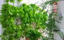 Nhà chung cư chật chội muốn trồng rau xanh thì làm thế nào?