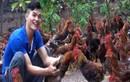 Chàng trai dân tộc Dao thu tiền tỷ mỗi năm nhờ nuôi gà