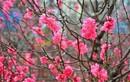 Những loại hoa nhất định phải có trong nhà ngày tết để chiêu tài lộc
