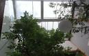 Ngắm nhà xanh yên bình, siêu thơ mộng ở thành phố Huế