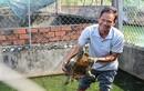 """Những trang trại rùa """"đẻ"""" ra tiền của nông dân Việt"""
