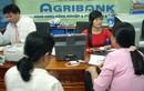 """Agribank ưu tiên """"con ông cháu cha"""" có vi phạm pháp luật?"""