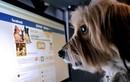 Nút share Facebook mạnh đến cỡ nào?