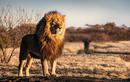 """Đi du lịch nhớ tránh xa 9 động vật có """"cú đớp tử thần"""""""
