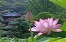 Phật dạy về 20 điều tu dưỡng lớn nhất cuộc đời mỗi con người