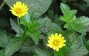 8 loại lá cây thuốc trong vườn dễ dàng trị mụn nhọt