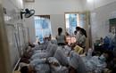 Bộ Y tế họp khẩn về dịch sốt xuất huyết ở HN