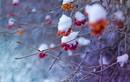 Top con giáp đón vận may liên tiếp mùa Giáng sinh