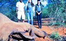 Phạm Hương, Lệ Hằng lặng người khi chứng kiến voi bị giết ở Kenya