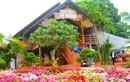 Nhà sàn ngập sắc hoa ở ngoại ô Hà Nội đẹp hút mắt