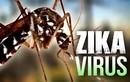 Việt Nam công bố 2 ca nhiễm Zika đầu tiên, một người đang mang thai
