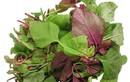Sai lầm tai hại khi ăn rau dền cần phải thay đổi ngay