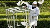 Chùm ảnh: TQ chao đảo vì dịch cúm gia cầm H7N9