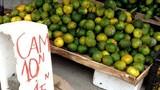"""""""Bóc trần"""" cam siêu rẻ giá 10.000 đồng/kg"""