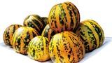 Bài thuốc chữa táo bón, béo phì từ dưa bở