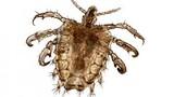 Sự khác biệt giữa côn trùng nội và ngoại ký sinh