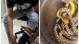 Indonesia bắt giữ hành khách giấu... 10 con trăn trong quần