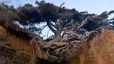 """Điểm danh những """"quái cây"""" trăm tuổi sống dai dẳng nhất"""