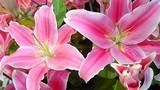 Các loài hoa cấm kỵ tuyệt đối không đặt trên bàn thờ