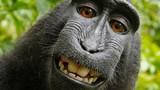 Nhiếp ảnh gia kiện bản quyền ảnh với...khỉ