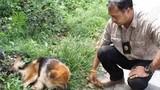 Chú chó đợi chủ bên đường quốc lộ suốt 7 tháng gây xúc động