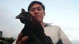 Săn gà đen